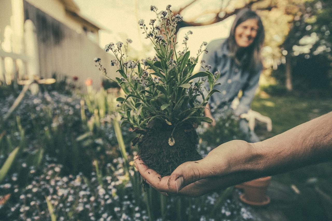 Pflanzenlieferung bei Gartenneugestaltung mit 19 % Umsatzsteuer